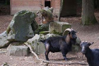enclos animalier situé dans l'enceinte de la Seilleraye